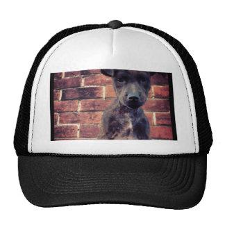 Puppy & brick work photo design cap