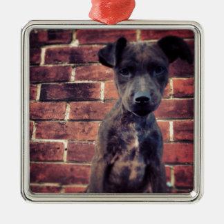Puppy & brick work photo design christmas ornament