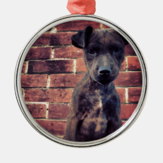 Puppy & brick work photo design Silver-Colored round decoration