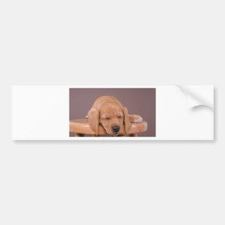 puppy bumper sticker