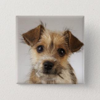 Puppy (Canis familiaris) 15 Cm Square Badge
