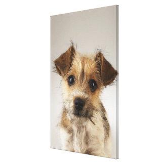 Puppy (Canis familiaris) Canvas Print