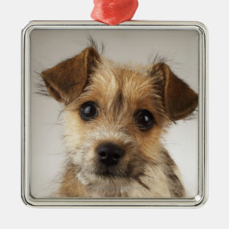 Puppy (Canis familiaris) Christmas Ornament
