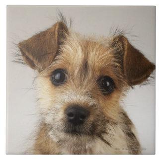 Puppy (Canis familiaris) Tile