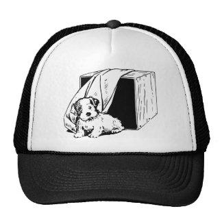 puppy cap