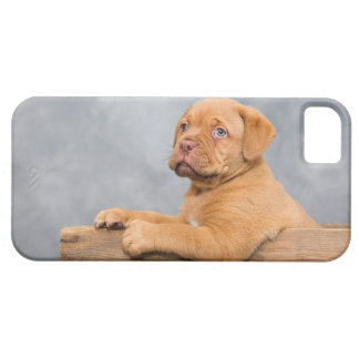 Puppy Case For The iPhone 5