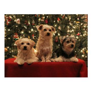 Puppy Christmas Postcard 2 lt