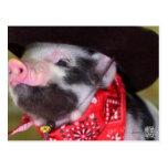 puppy Cowboy Baby Piglet Farm Animals Babies