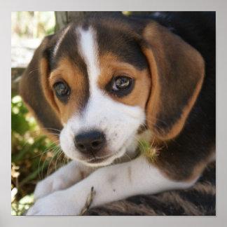 Puppy Dog Beagle Poster