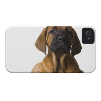 Puppy Dog iPhone 4 Case-Mate Case