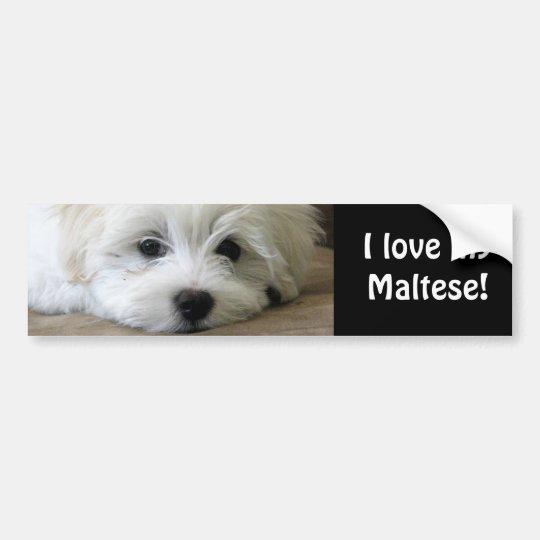 Puppy Eyes Bumper Sticker