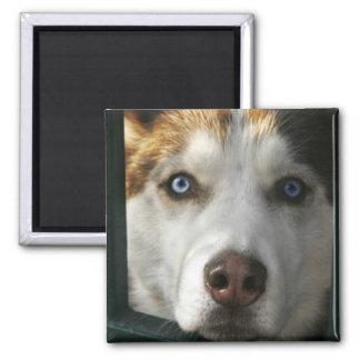 Puppy Eyes Magnet