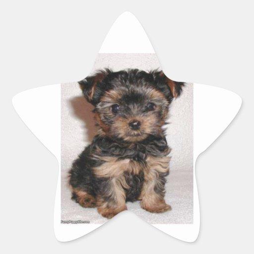 Puppy Eyes Star Sticker