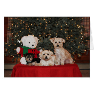 Puppy Family Holiday Card