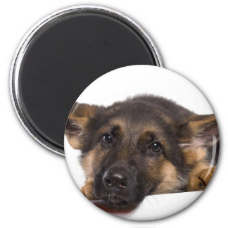 puppy German shepherd Magnet