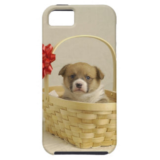 Puppy in a basket iPhone 5 cover