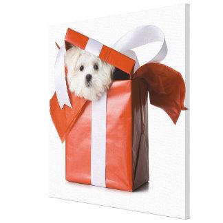 puppy in a box canvas print