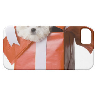puppy in a box iPhone 5 covers
