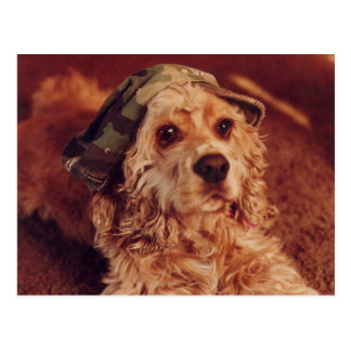 Puppy in a Camouflage Cap Postcard