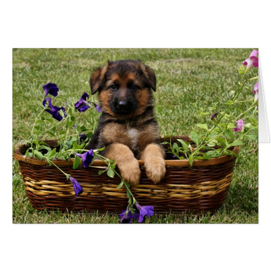 Puppy in Basket Card