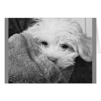Puppy in Blanket Black and White Photo Card