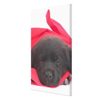 Puppy in blanket canvas print