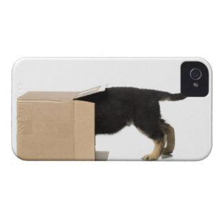 Puppy in cardboard box iPhone 4 case