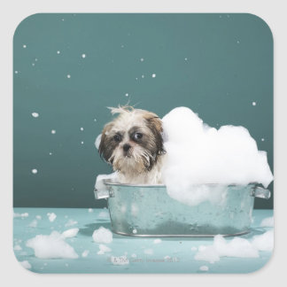 Puppy in foam bath square sticker