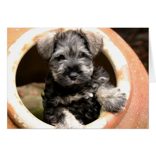 Puppy in Pot Card