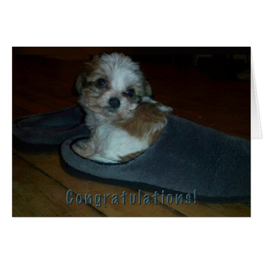 Puppy in slipper, congratulations puppy adoption. card