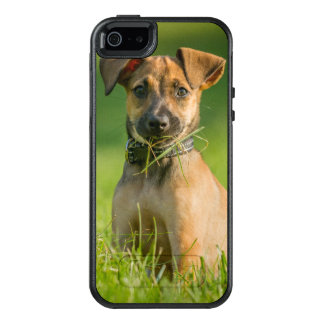 Puppy In The Grass OtterBox iPhone 5/5s/SE Case