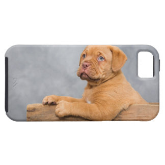 Puppy iPhone 5 Covers