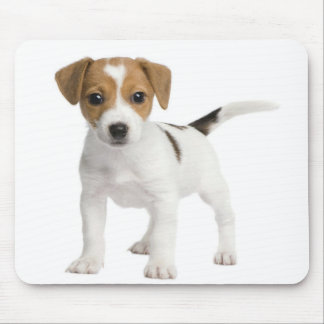 Puppy Jack russell Mouse Pads