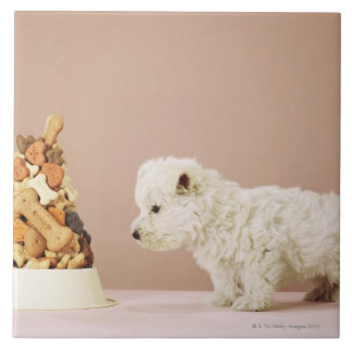 Puppy looking at pile of biscuits in dog bowl large square tile