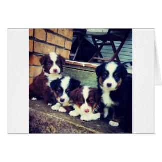 Puppy Love - Adorable  Australian Shepherds Card