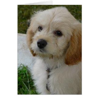 Puppy Love - Cute MaltiPoo Dog Photo Greeting Card