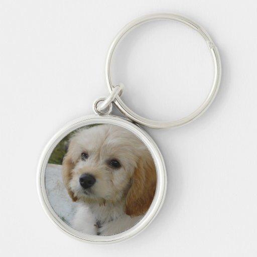 Puppy Love - Cute MaltiPoo Dog Photo Key Chain