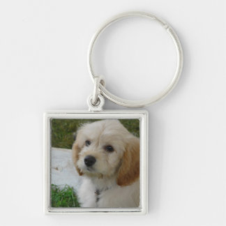 Puppy Love - Cute MaltiPoo Dog Photo Silver-Colored Square Key Ring