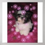 Puppy Love -Poster