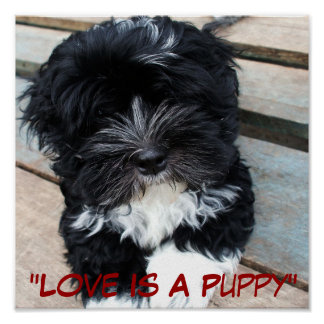 """""""Puppy Love"""" poster by Zoltan Buday"""