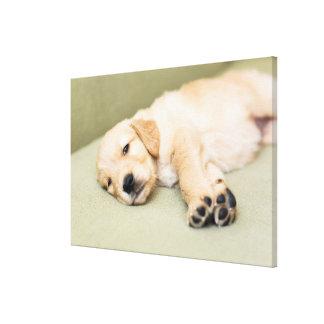 Puppy Lying Down On Sofa Canvas Print