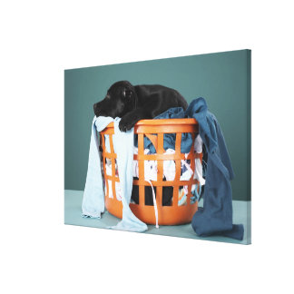 Puppy lying in laundry basket canvas print
