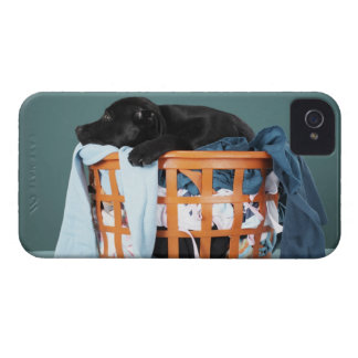 Puppy lying in laundry basket iPhone 4 Case-Mate cases