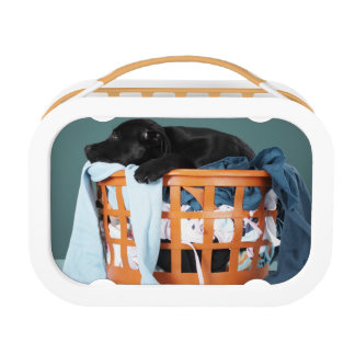 Puppy lying in laundry basket lunch box