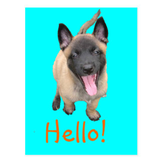 puppy malinois postcard