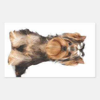 Puppy of the Yorkshire Terrier Rectangular Sticker