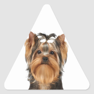 Puppy of the Yorkshire Terrier Triangle Sticker