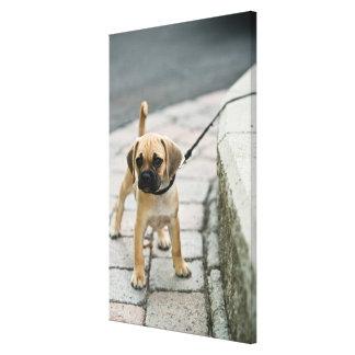 Puppy on leash canvas print