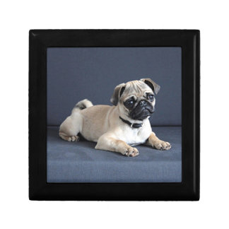 Puppy On Lounging Couch Small Square Gift Box