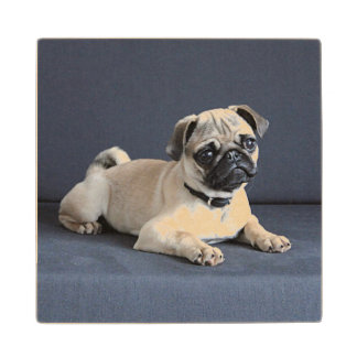 Puppy On Lounging Couch Wood Coaster